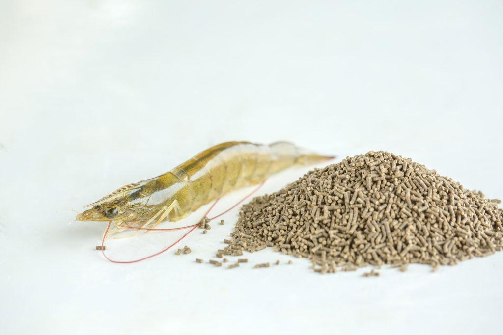 aquafeed shrimp feed pellets