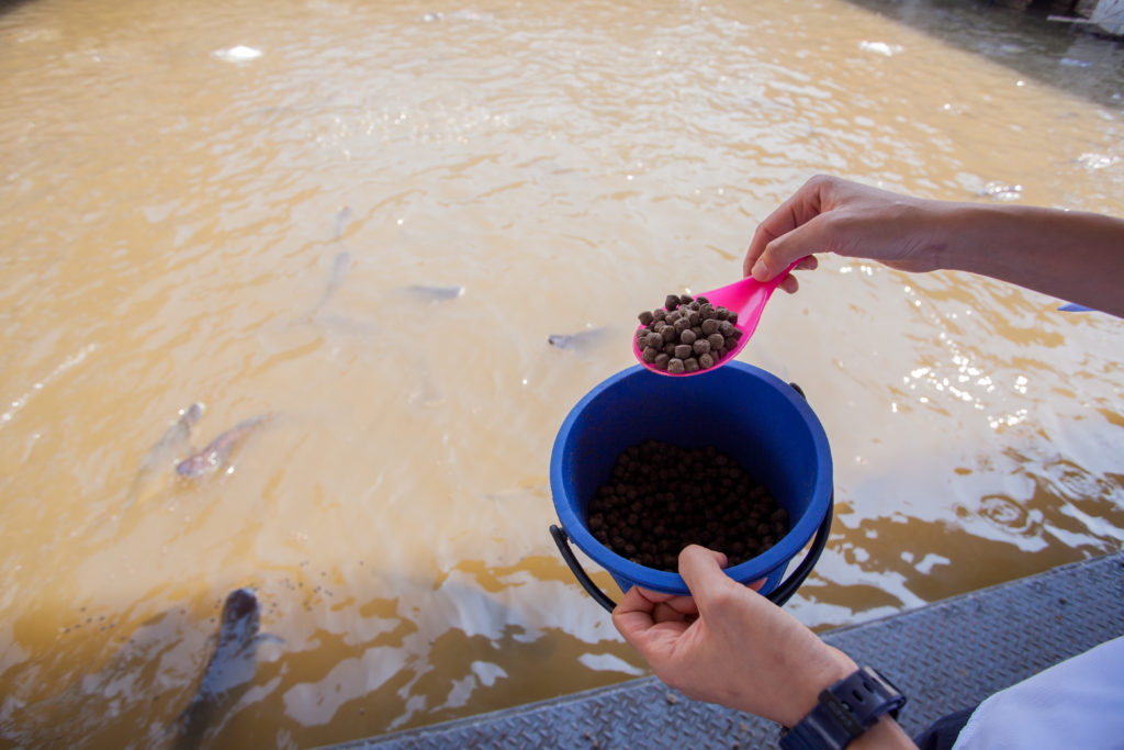 aquafeed_feeding fish