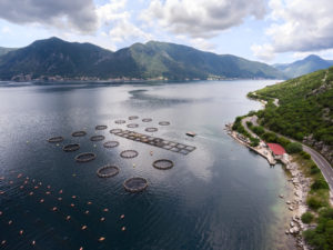 Aquafeed fish farm aerial photo
