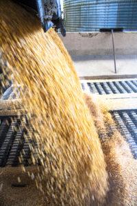 corn-receiving_WEM-Automation