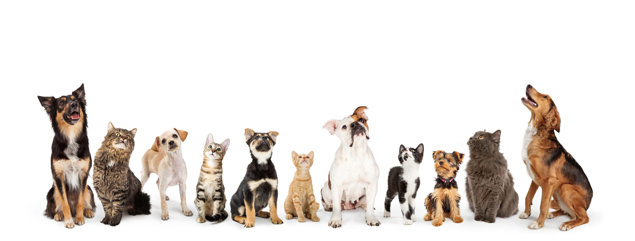 Dogs-Cats_WEM-Automation